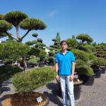 Tvarované okrasné stromy Impeka - 012