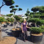 Tvarované okrasné stromy Impeka - 013