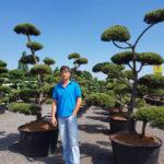 Tvarované okrasné stromy Impeka - 021