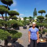 Tvarované okrasné stromy Impeka - 032