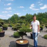 Tvarované okrasné stromy Impeka - 038