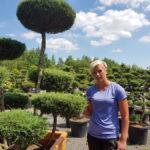 Tvarované okrasné stromy Impeka - 039