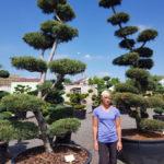 Tvarované okrasné stromy Impeka - 041