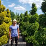 Tvarované okrasné stromy Impeka - 050
