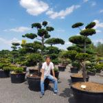 Tvarované okrasné stromy Impeka - 051