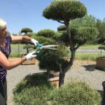 Tvarované okrasné stromy Impeka - 052
