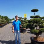 Tvarované okrasné stromy Impeka - 054