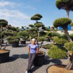 Tvarované okrasné stromy Impeka - 057