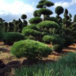 Stromy na plantážích - 01