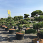 Tvarované stromy Impeka 2017 - 04