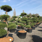 Tvarované stromy Impeka 2017 - 07