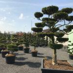 Tvarované stromy Impeka 2017 - 08