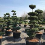 Tvarované stromy Impeka 2017 - 13