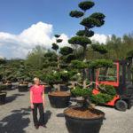 Tvarované stromy Impeka 2017 - 19