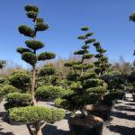 Tvarované stromy Impeka 2018 - 09