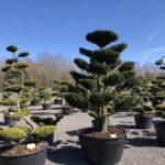 Tvarované stromy Impeka 2018 - 12