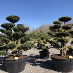 Tvarované stromy Impeka 2018 - 13