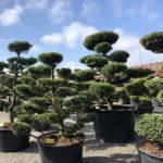 Tvarované stromy Impeka 2018 - 20