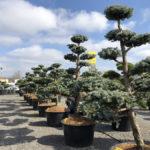 Tvarované stromy Impeka 2018 - 24