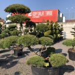 Tvarované stromy Impeka 2018 - 28