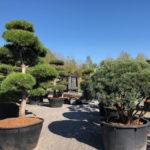 Tvarované stromy Impeka 2018 - 30