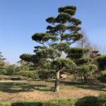 Stromy na plantážích - 03