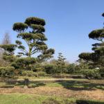 Stromy na plantážích - 39