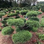 Stromy na plantážích - 26