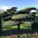 Stromy na plantážích - 24