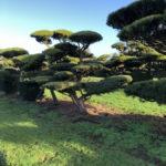 Stromy na plantážích - 23