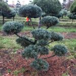 Stromy na plantážích - 19