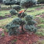 Stromy na plantážích - 41