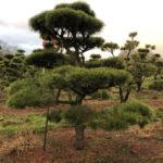 Stromy na plantážích - 46