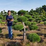 Stromy na plantážích - 36