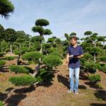 Stromy na plantážích - 33