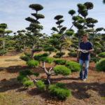 Stromy na plantážích - 15