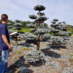 Stromy na plantážích - 27