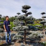Stromy na plantážích - 43