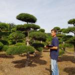 Stromy na plantážích - 30