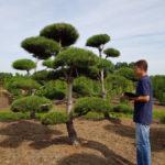 Stromy na plantážích - 25