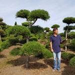Stromy na plantážích - 10