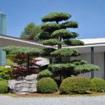 Tvarované stromy - niwaki - 1