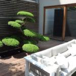 Tvarované stromy - niwaki - 4