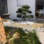 Tvarované stromy - niwaki - 6