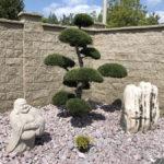 Tvarované stromy - niwaki - 7