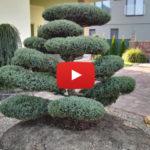Tvarované stromy v okrasných zahradách