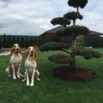 Výsadba tvarovaných stromů - 03