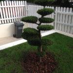 Výsadba tvarovaných stromů - 07