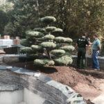 Výsadba tvarovaných stromů - 11