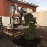 Výsadba tvarovaných stromů - 16